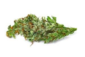 The White Cannabis Bud