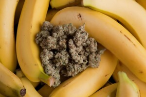 Banana OG Cannabis bud
