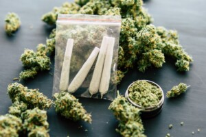 Blueberry Pie Cannabis Bud