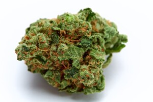 Golden Goat Cannabis bud