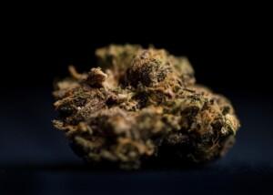 Grape Ape Cannabis bud