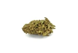 Jillybean Cannabis bud