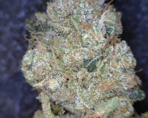 Mango Kush Cannabis flower close up