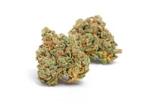 Tahoe OG Cannabis bud