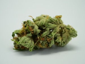 Black Russian Cannabis bud