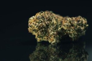 Blackwater Cannabis bud