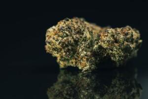 Blackwater Cannabis bud