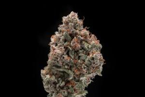 Cherry Cookies Cannabis bud