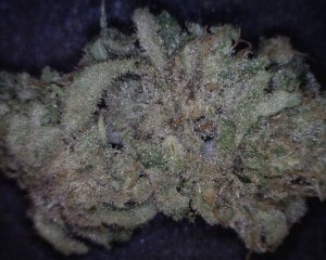 Chiesel Cannabis flower close up