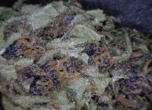 Cookies Kush Cannabis flower close up