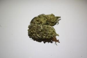 Dos-Si-Dos Cannabis bud