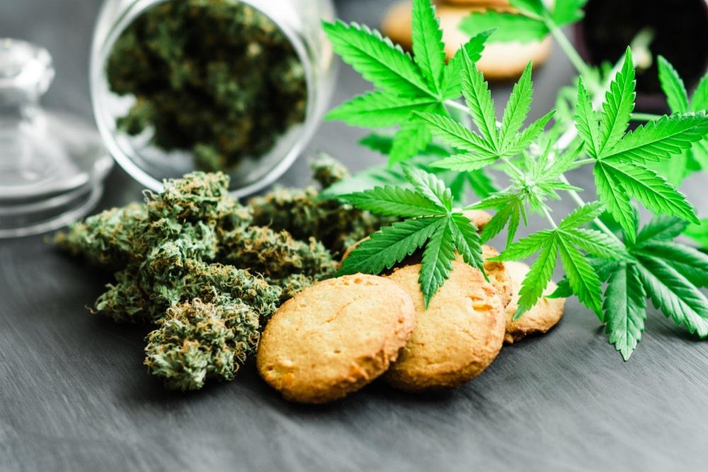 GMO Cookies Cannabis Strain