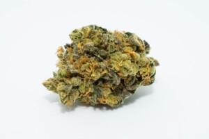 GMO Cookies Cannabis bud