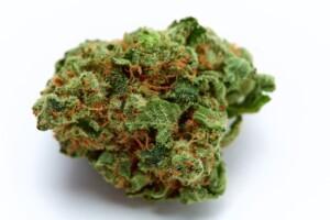 Goji OG Cannabis bud