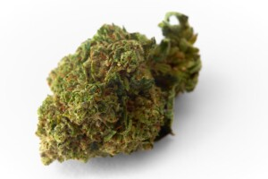 Grape God Cannabis bud