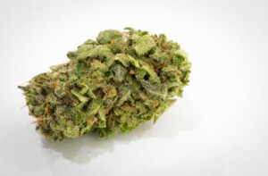 Jack Herer Cannabis Bud