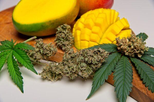 Juicy Fruit Cannabis Strain Review