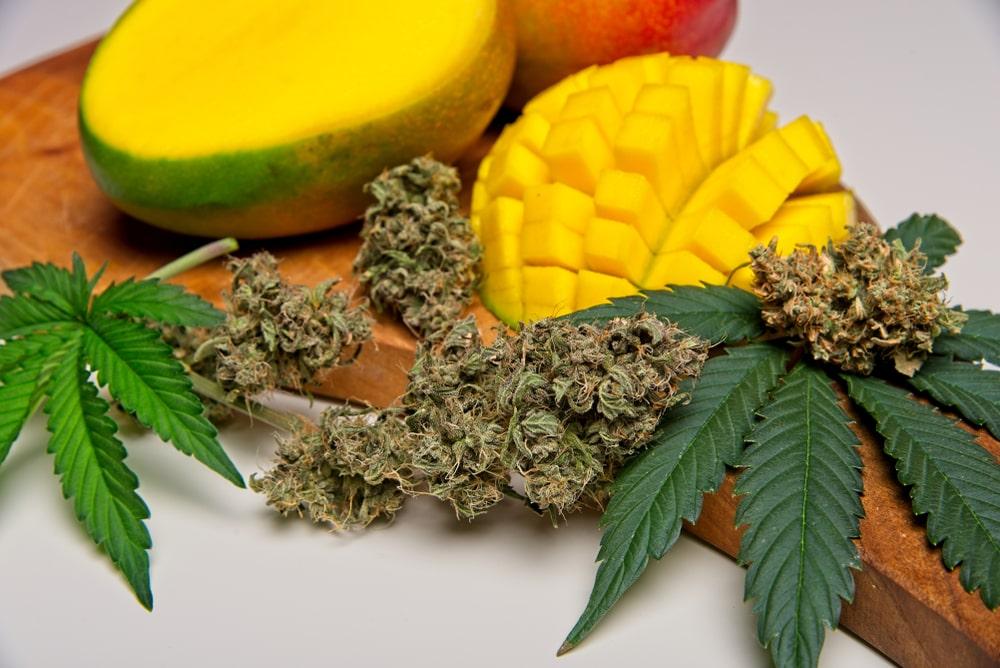 Juicy Fruit Cannabis Strain