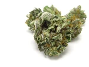 Kosher Kush Cannabis bud
