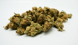 Master Kush Cannabis bud