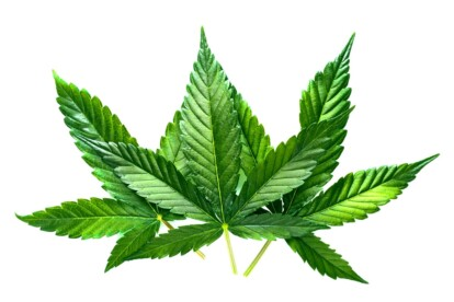 Slurricane Cannabis Strain