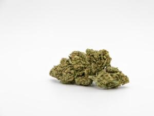 Slurricane Cannabis bud