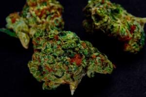 Sour OG Cannabis bud