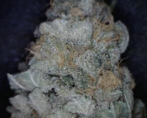 Strawberry Diesel Cannabis flower close up