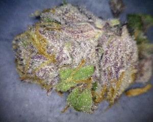 Sunset Sherbert Cannabis flower close up