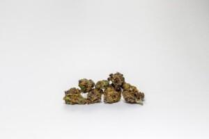 Tangerine Dream Cannabis bud
