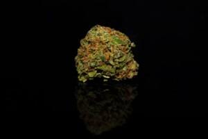 The Black Cannabis bud