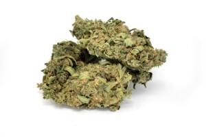 UK Cheese Cannabis bud