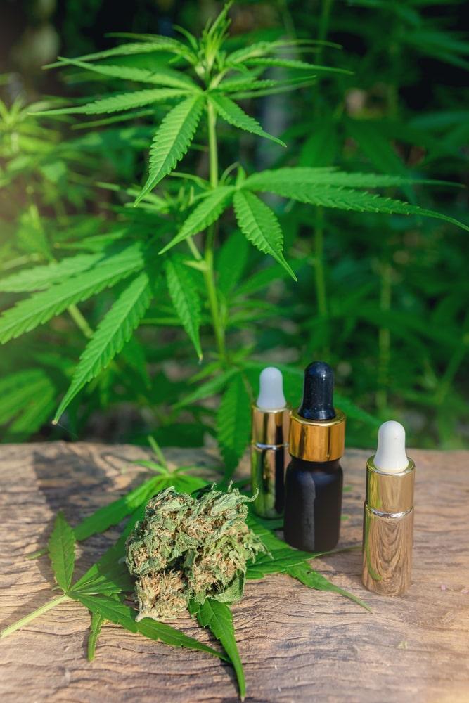 Mary's Medicinals CBD Oil