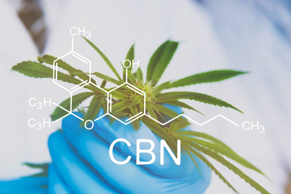 CBN-rich cannabis strains