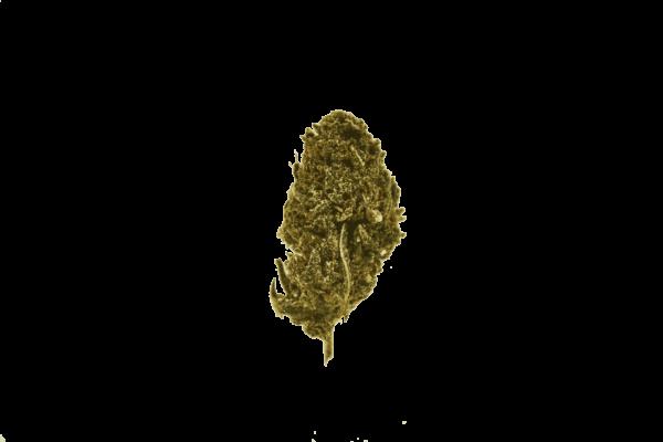 Fortified Bruce Banner – Delta 8 CBD Hemp Flower