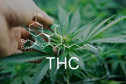 Thc O acetate